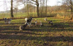 Bezitters loslopende honden Twickel op de bon