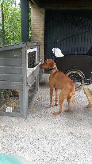 Update: Hond aan Kievitstraat Delden terug bij eigenaar