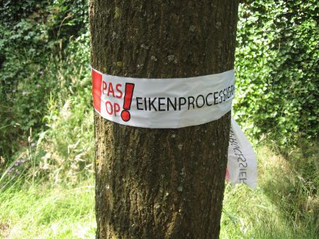 De eikenprocessierups is weer terug in Delden