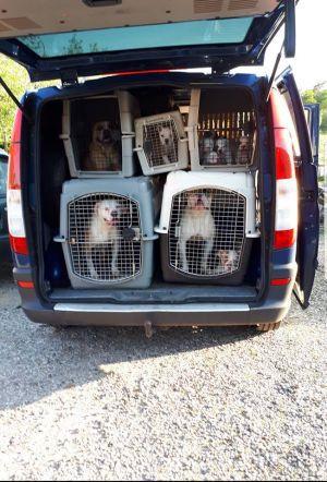 College: 'Ambt Deldense hondenfokker meerdere keren gecontroleerd'