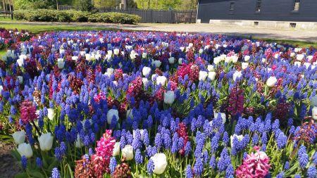 Stuur een foto in van de bloemenvlag en win het prachtige boek van DTNT!
